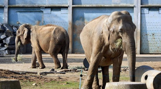 elephants-zoo-tete-dor