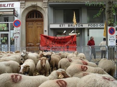 Manif-Moutons-puce-RFID-Lyon