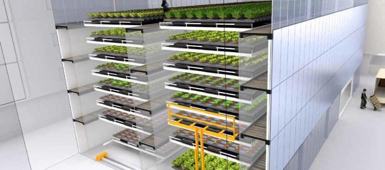 L'usine à salades fera-t-elle l'agriculture du futur, en milieu urbain ?