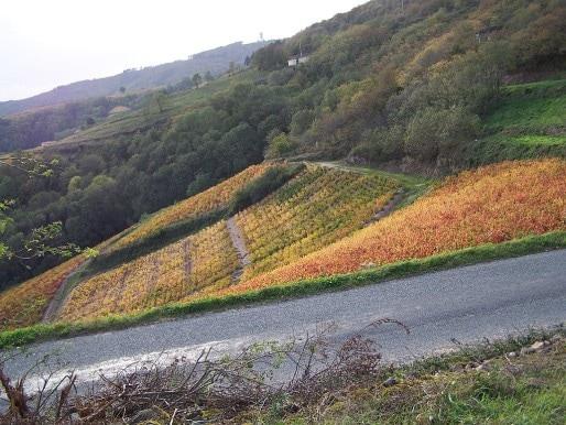 Vignes_en_automne_au_dessus_d'Avenas