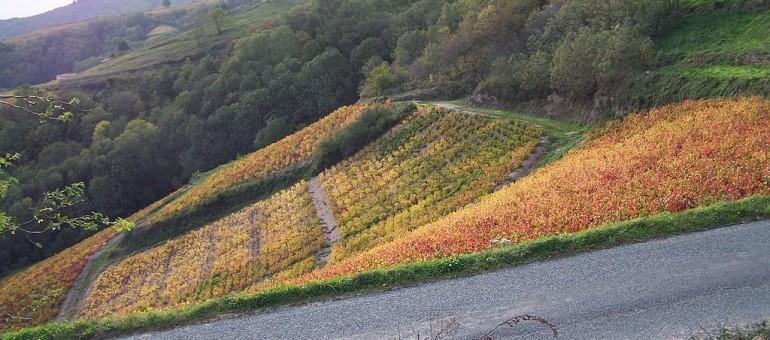 Côtes-du-Rhône : Les épandages aériens jugés illégaux pour 2012 continuent en 2014