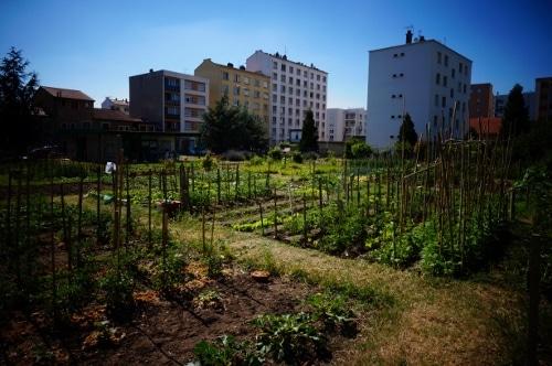 Jardins partagés à Lyon, ou comment faire pousser sa tomate au pied des immeubles
