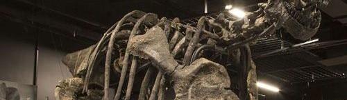Le squelette de camasarus qui trônera dans le Musée des Confluences à Lyon.