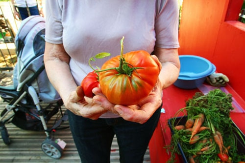 Jardins partag s lyon ou comment faire pousser sa - Espace entre les pieds de tomates ...