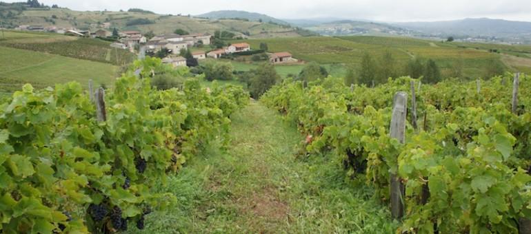 Le vin naturel va-t-il sauver le Beaujolais?