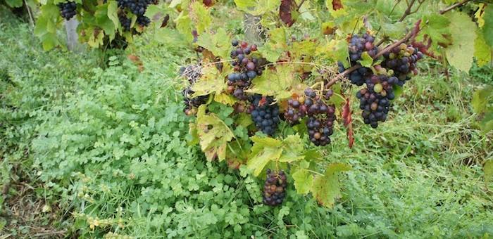 «Les viticulteurs sont les premiers exposés au changement climatique»