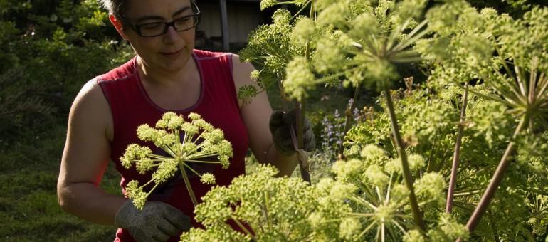 Cultiver un jardin autonome, une expérience testée et approuvée