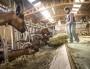 La lente féminisation de l'agriculture en Auvergne-Rhône-Alpes