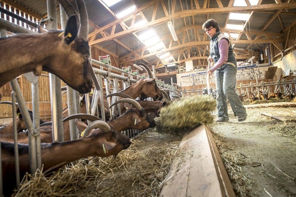 La lente f minisation de l 39 agriculture en auvergne rh ne alpe - Chambre d agriculture d auvergne ...