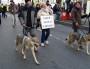 Trois chiens-loups tchèques en tête de cortège à Lyon. Ces bêtes sont un croisement entre un berger allemand et un loup des Carpates. ©LB/Rue89Lyon