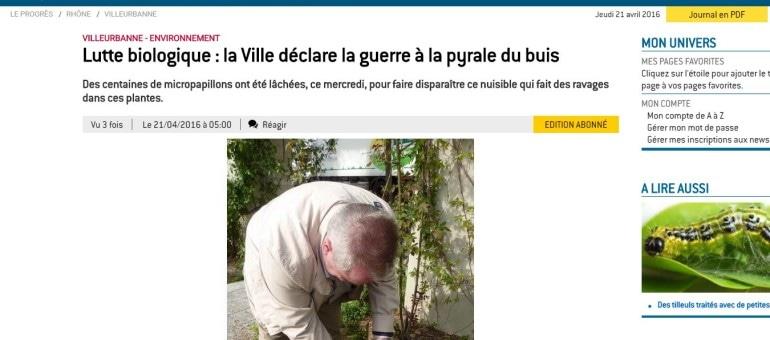 A Villeurbanne, un lâcher de papillons plutôt que des pesticides