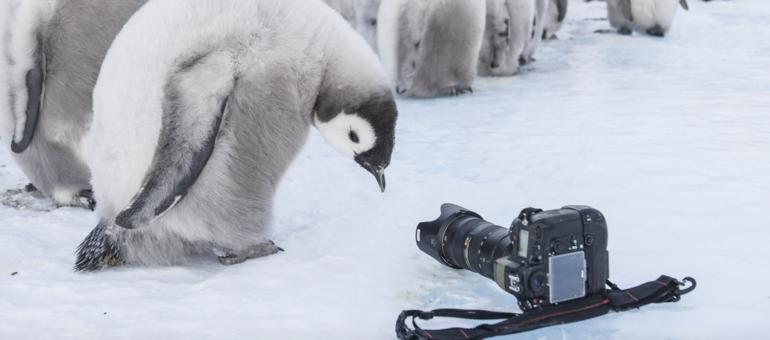 [Vidéo] « Antarctica », une expo pour se rafraîchir