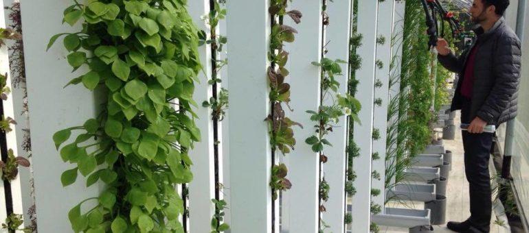 Les fermes urbaines : cultiver à la verticale pour nourrir Lyon ?