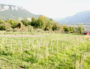 Une vigne de servanin plantée en 2016 par Sébastien Bénard dans sa propriété de La Buisse. Au fond, la vallée de l'Isère. ©LB/Rue89Lyon