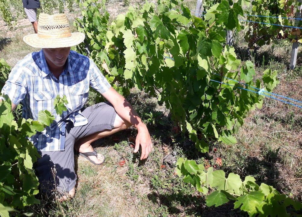 Fabien Forest, vigneron à Lantignié. ©LB/Rue89Lyon
