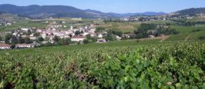Lyon : Beaujolais nouveau, à boire cette semaine… ou à laisser vieillir