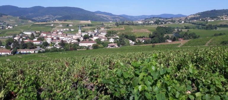 Le renouveau des vins du Beaujolais passera-t-il par Lantignié… et le bio ?