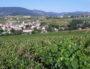 Vignoble autour de Lentigné