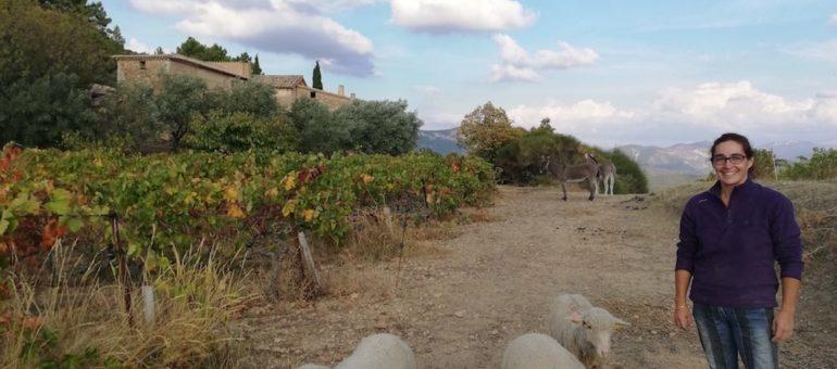 Face au dérèglement climatique, les options éthiques de vignerons dans le Sud de la France