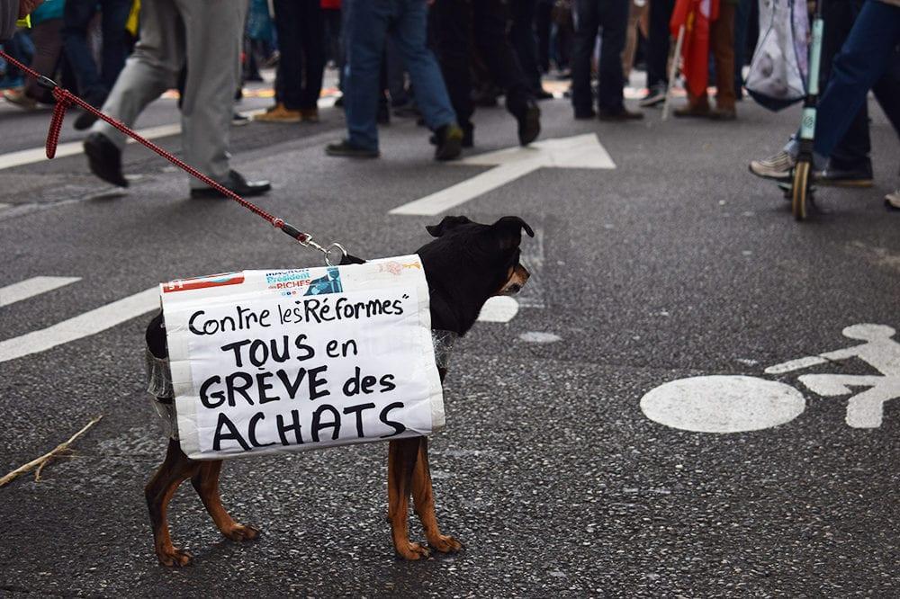 À Lyon, Le chien de tête de cortège. @AD/Rue89Lyon