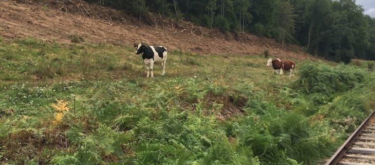 En Auvergne-Rhône-Alpes, le Modem ergote avant de lâcher Laurent Wauquiez