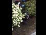 """La BAC de Lyon dans une résidence privée du quartier de Gerland, en train de chasser des participants à la manif des """"gilets jaunes"""" du samedi 6 avril."""