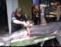 Un requin renard découpé par un poissonnier MOF de la Croix-Rousse à Lyon. Il provient d'une espèce protégée. Capture d'écran du petit film réalisé par Le Progrès. ©Rue89Lyon