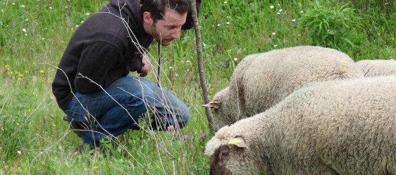 Des moutons dans Lyon ou comment «ramener un peu de campagne au bas des immeubles»