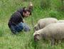 Bastien Boyer en compagnie du moutons Garance, la mascotte. ©NP/Rue89Lyon.