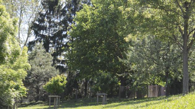 Quelques cerisiers du quartier du Vergoin en mai 2019, à Lyon 9e.