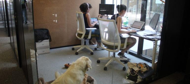 «J'ai des collègues sans vraiment en avoir»: le coworking contre l'isolement