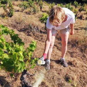 Florence Monferran, dans ses vignes en Languedoc. DR