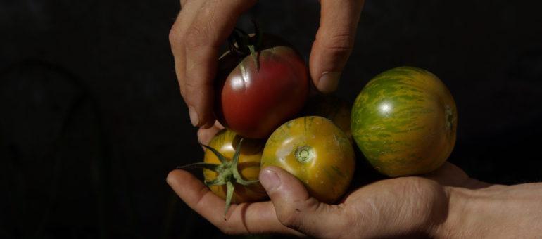 «Préserver la qualité et la diversité de notre alimentation, un défi» en débat à Lyon