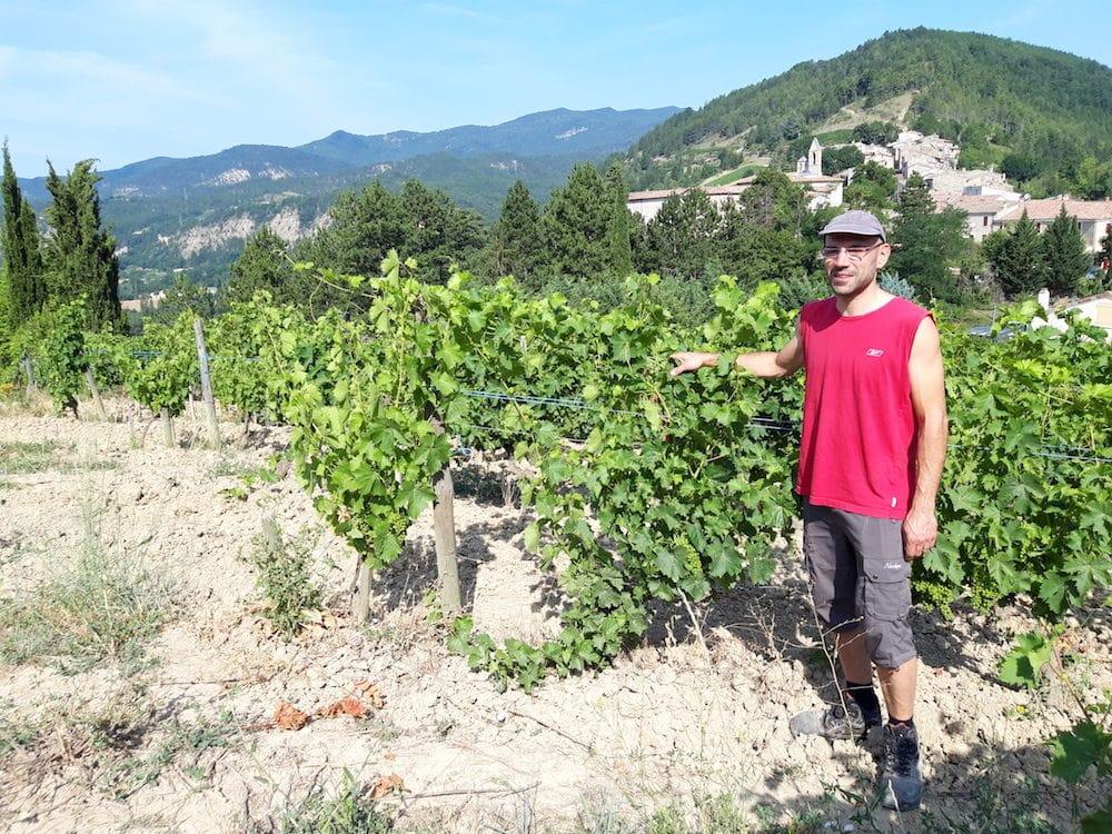 Thomas Achard, au milieu des vignes de son domaine, Achard-Vincent. ©LB/Rue89Lyon