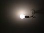 «La lumière, source de révolutions conceptuelles», une conférence ce mercredi à Lyon