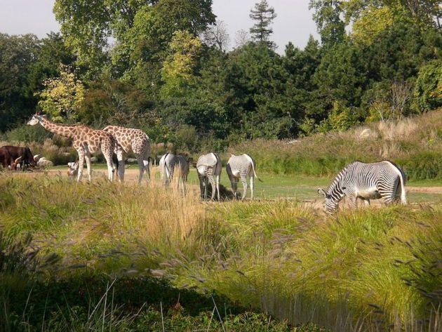 Au zoo du Parc de la Tête d'Or à Lyon. DR