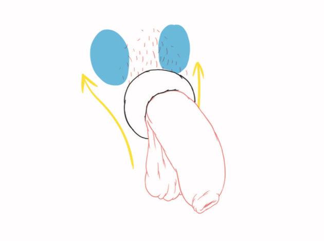 Anneau de contraception masculine. Illustration © Jüne PLÃ - Jouissance Club