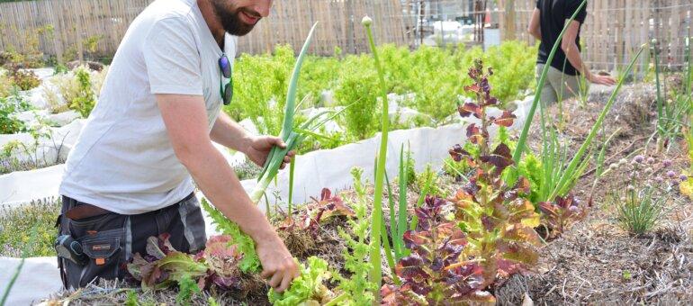 À Lyon-Gerland, une ferme urbaine pousse sur le bitume avant de migrer sur les toits