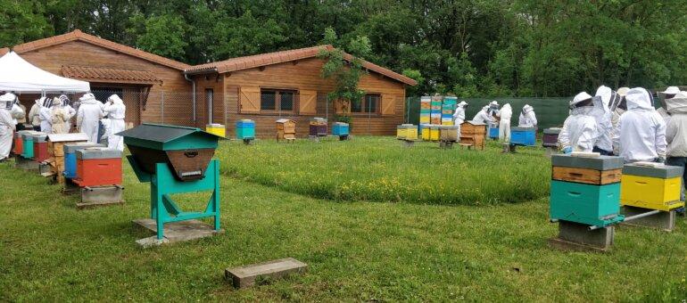 À Lyon, «les abeilles sont décimées»