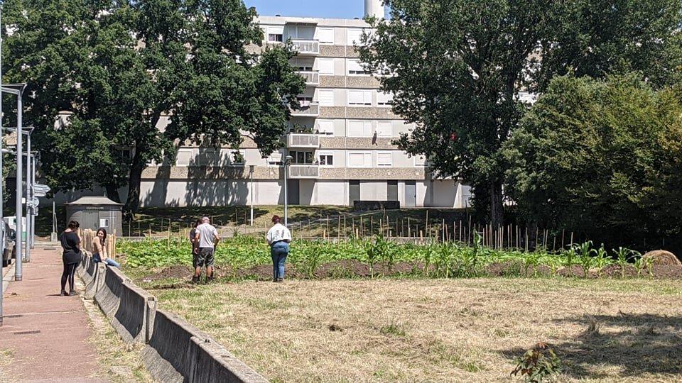 Le potager déjà installé dans le quartier de la Sauvegarde, où quelques employés de la mission locale plantent déjà des légumes. LS/Rue89Lyon