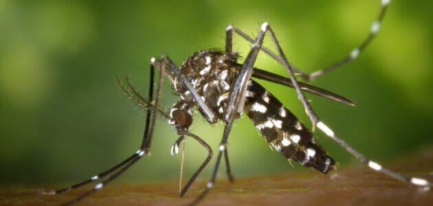 Moustiques tigres à Lyon : «Il n'y a pas de solution miracle»
