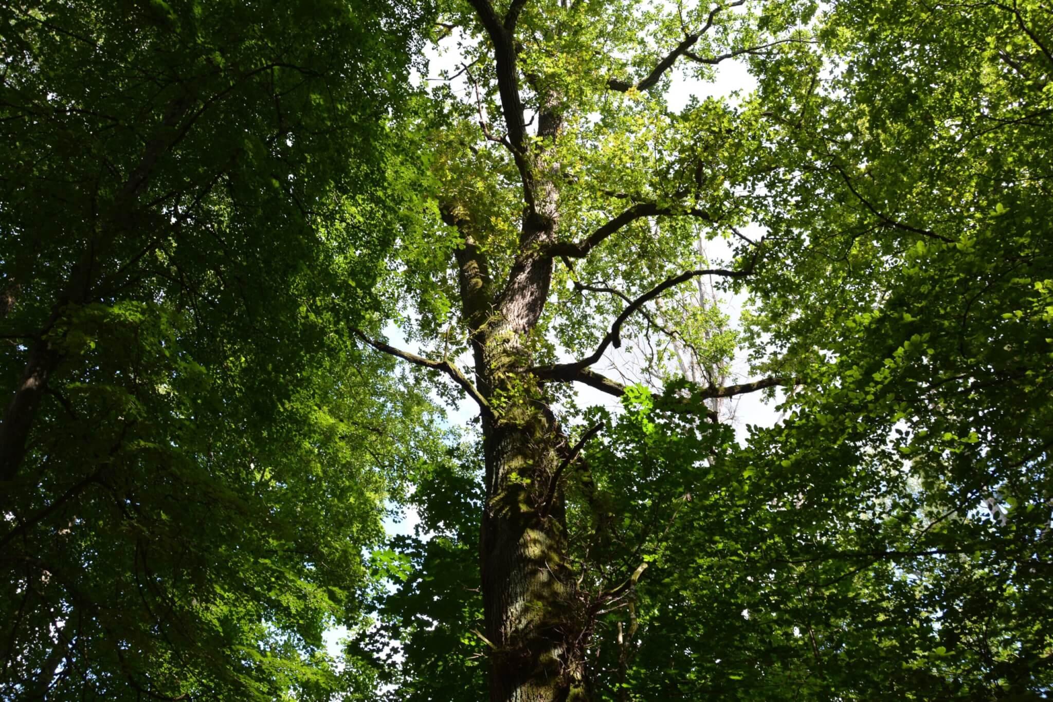 La forêt de Francheville