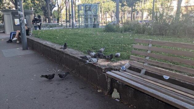 Des pigeons qui picorent sur la place Jean Macé ©LS/Rue89Lyon