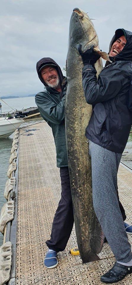 pêche Lyon silure Rhône Lyon