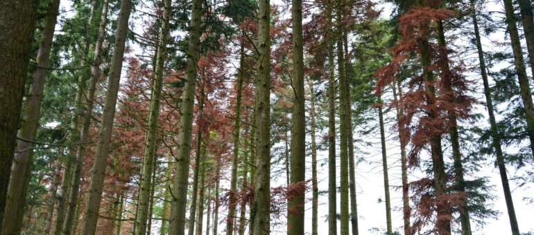 Climat à Courzieu : quand les forêts de l'ouest de Lyon voient rouge