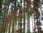 Les arbres dépérissent dans les forêts