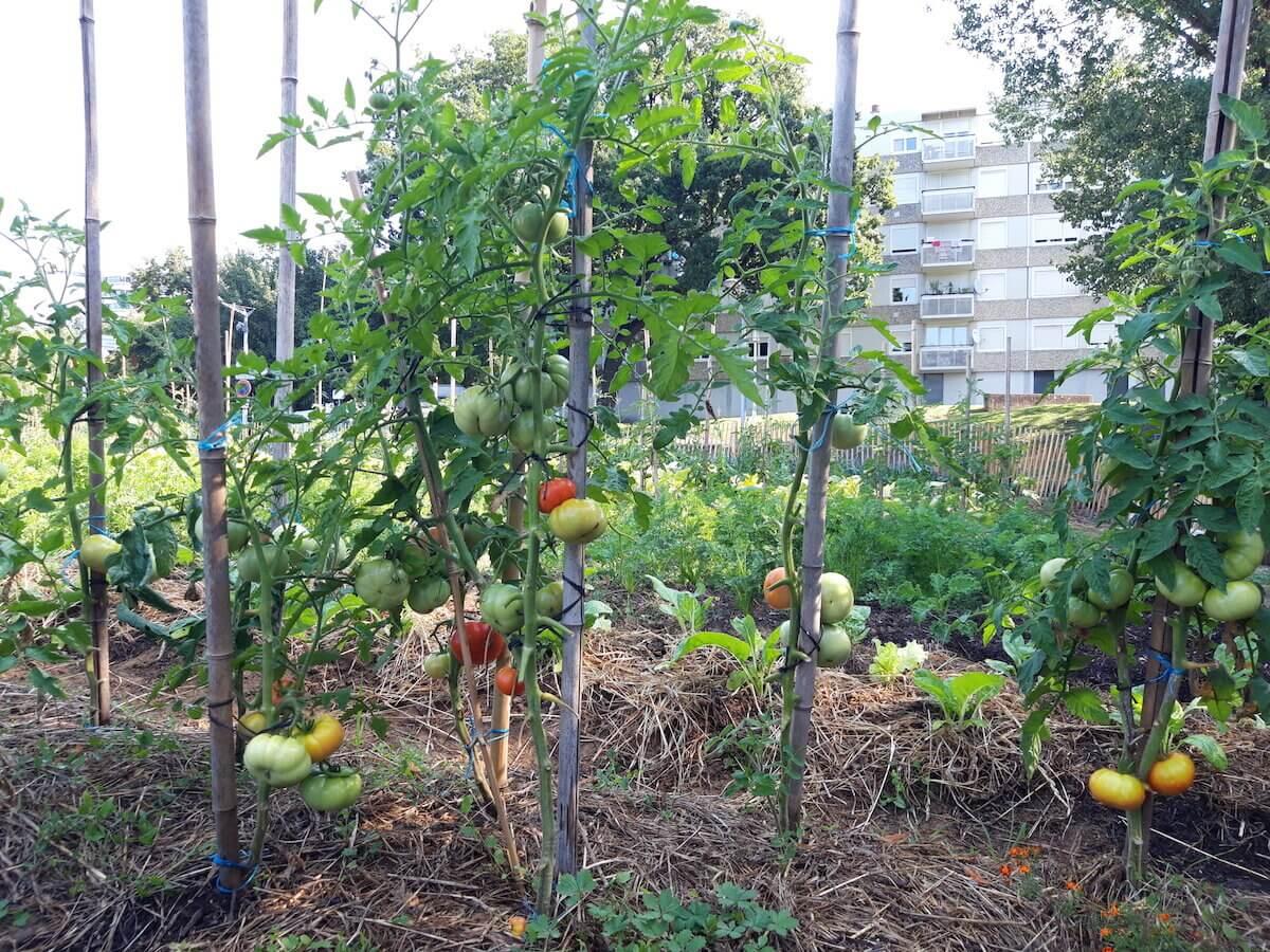 potager Duchère Sauvegarde agriculture urbaine